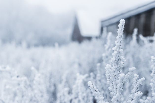 snowymntmorning